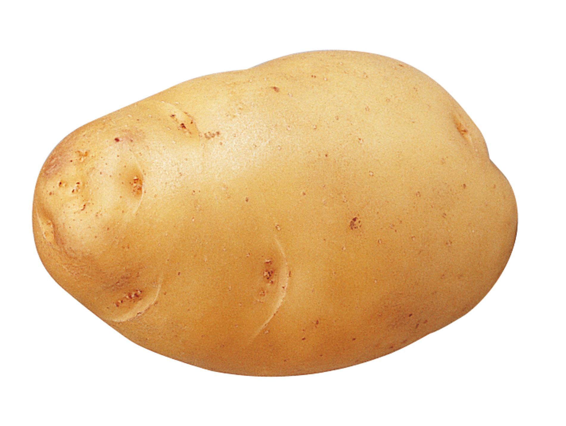 Plants de pommes de terre Bintje 35/45 5kg