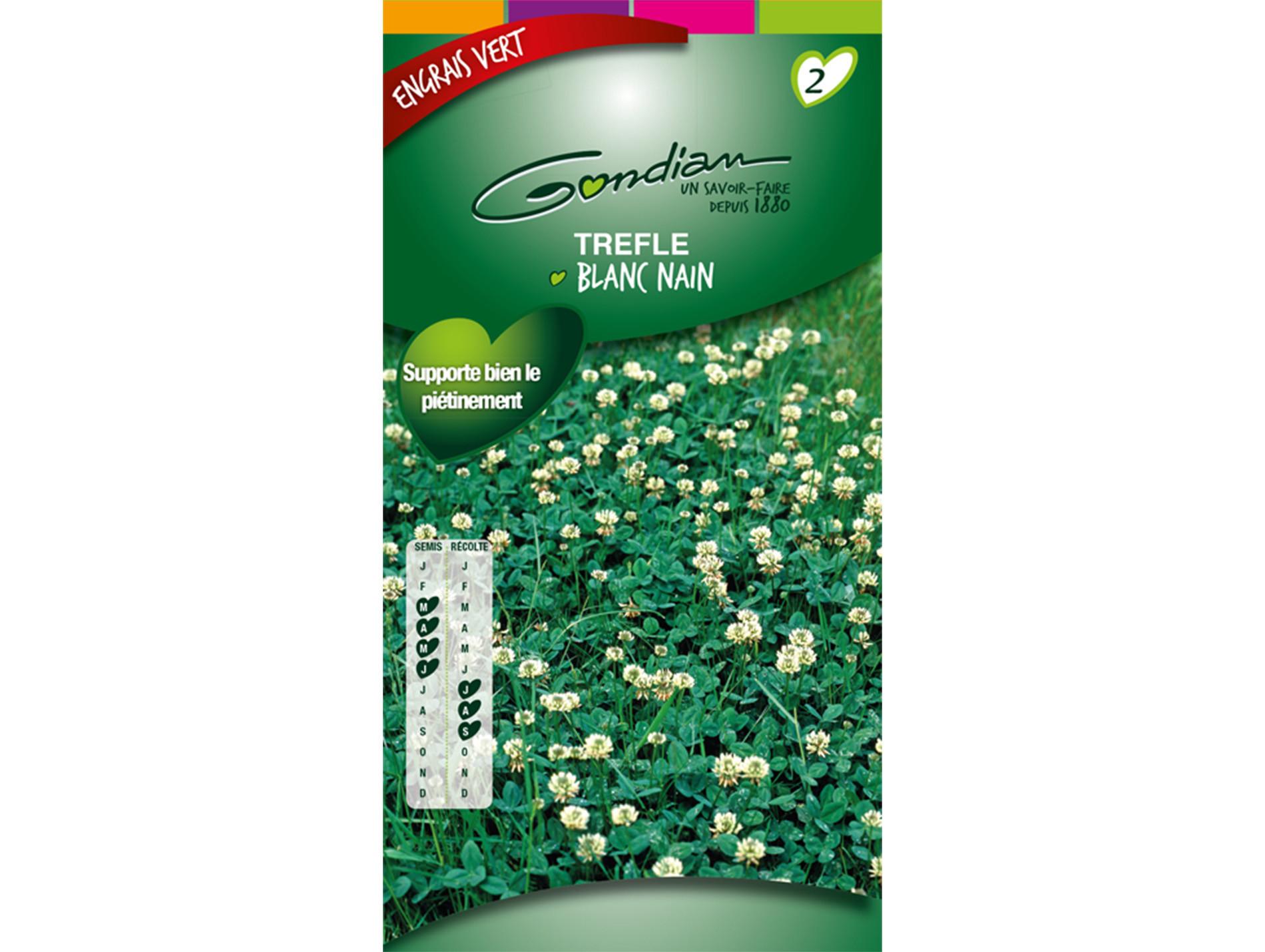 Semences engrais vert Trèfle blanc nain 60g