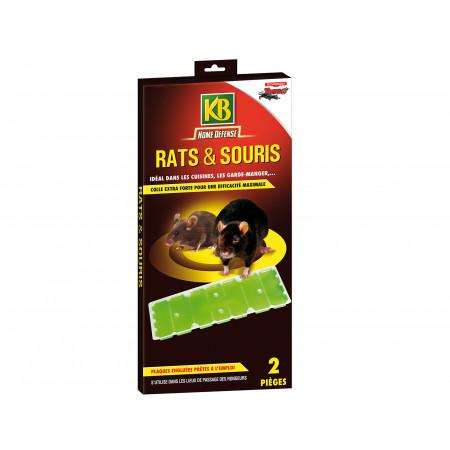 Piège englué rats et souris x2