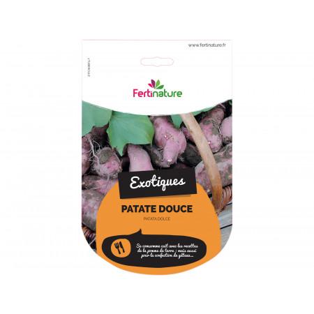 Plant de patate douce Chromo de 1 plant