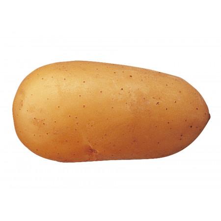 Plants de pommes de terre Charlotte 35/45 25kg