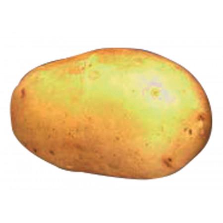 Plants de pommes de terre Gourmandine 32/35 25kg