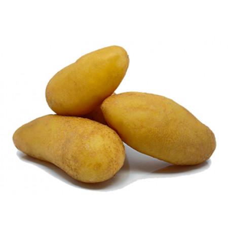 Plants de pommes de terre Nawen variété Maldive 28/35 1,5kg