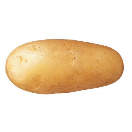 Plants de pommes de terre Princesse Amandine 25/32 1,5kg