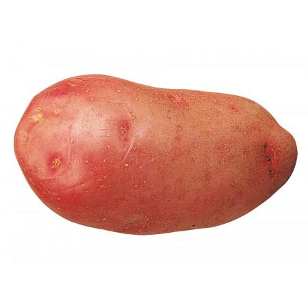 Plants de pommes de terre Rosabelle 35/45 25kg +2kg Michelle