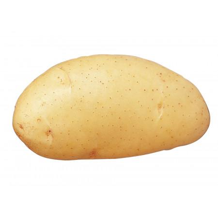 Plants de pommes de terre Spunta 35/45 25kg