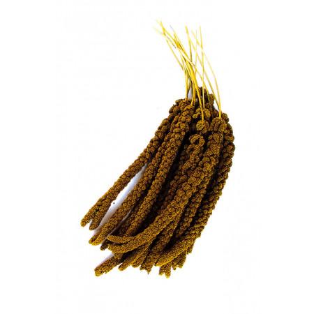 Millet en grappe 1kg