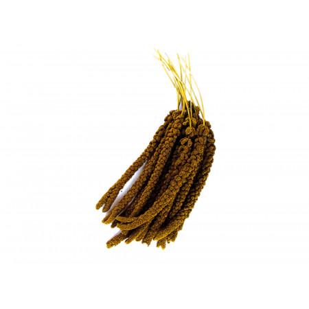 Millet en grappe 500g