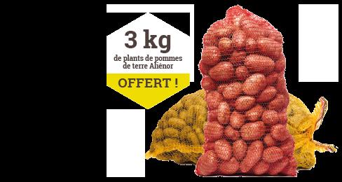 Plants certifiés Pommes de terre Rosabelle ou Bintje - Calibre 35/45 - 3 kg de plants de pommes de terre Aliénor offert !